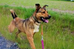 Bax je 2 letý kříženec NO. Hodný, velice energický, menší vzrůst, nevhodný k jiným psům a zvířatům, vhodný na psí sporty, ovládá základní poslušnost.