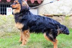 Baronek je 2 letý křížený Teriér. Hodný, divoch, poslušný, mazel, snášenlivý s ostatními pejsky a domácími zvířaty, vhodný pouze na zahradu.