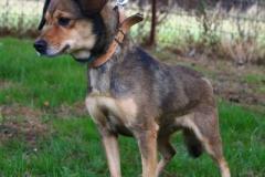 Dony, fena 7 let, Voříšek, zvyklá v bytě, ovládá základní poslušnost, vhodná k jiným psům, při manipulaci projevuje agresi.