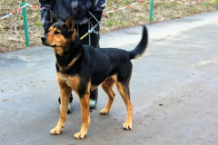 Kim je 10 letý Německý ovčák křížený s Akita Inu. Kim je krásný, hodný, velký pes, vhodný do bytu i na zahradu, poslušný, nevhodný k jiným zvířatům a psům.