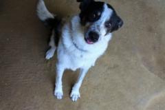 Rex je 7letý Voříšek. Vhodný spíše na zahradu k domečku, vhodný k starším lidem, zcela nevhodný k dětem, jiným psům a zvířatům, útěkář, ovládá základní poslušnost.