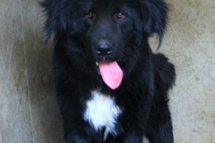 Ben je 11 měsíční pes, kříženec Kavkazana a Novofunlandského psa. Ben je živý, veselý, hodný, ale nevychovaný, vhodný na zahradu k domku, k opravdu velkým dětem.