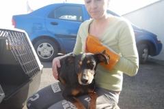 Olda, pes, 4roky, křížený Pinč.