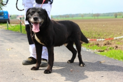 Dědek je 10 letý Labrador, a svůj věk je dost hyperaktivní, hodný a přátelský.