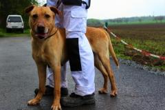 Monty je 6 letý kříženec Labradora.