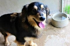 Fredy je 9 měsíční kříženec Hovawart, hodný a velmi energický.
